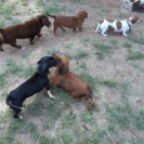 Pups Playing