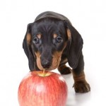 Help Your Dachshund Puppy Grow Up Strong