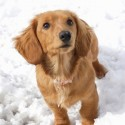 Keeping Your Puppy Healthy And Active During Winter