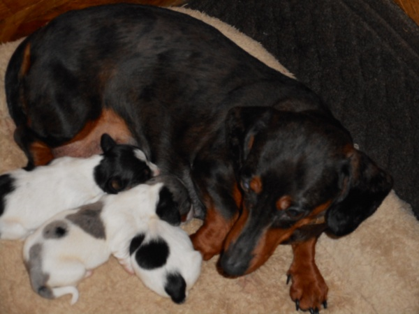 Windy Had Her New Puppies on 2-3-16.