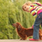Tips for Finding the Right Dachshund Breeder