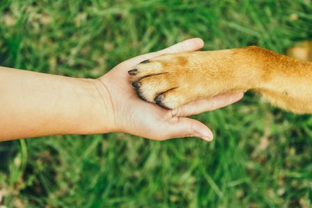Proper Dog Paw Care