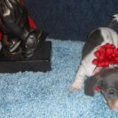 Lulu's AKC and CKC Registered Short Haired Blue and Tan Piebald Female Dachshund is Sold to Aaron.