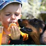 Boy Feeding His Dog