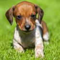 4 Tips for Housebreaking Your Puppy