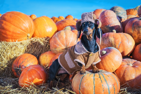 Thanksgiving Foods That Are Safe for Your Dog