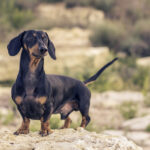 Everything You Need to Know About Heartworm